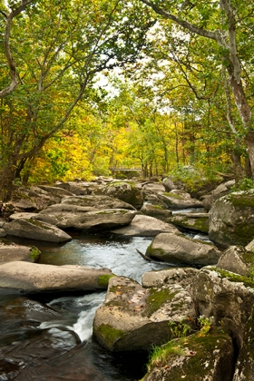 "Brian McNeill's photograph ""Unami Creek in Autumn."""